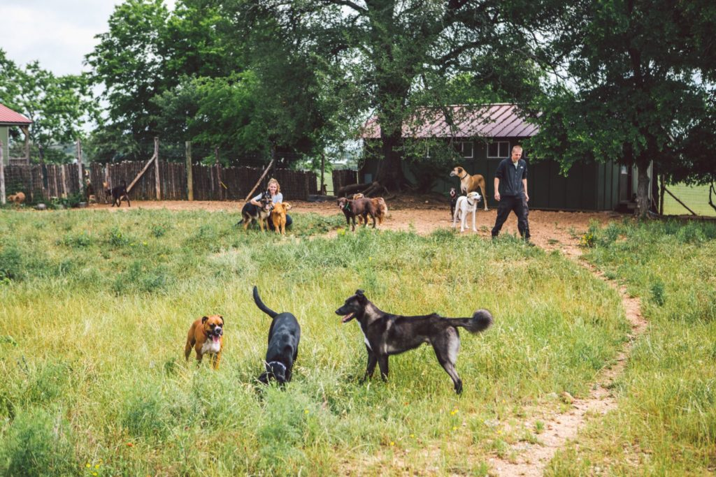Barking Springs Dog Ranch